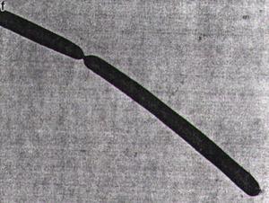 The genome of the hyperthermophile Methanopyrus kandleri